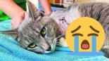 gato pierde pata pirotecnia violencia animal