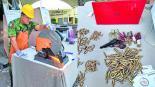 Consejo Ciudadano de Seguridad destruye armas de fuego en Cuernavaca