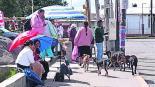 perros calljeros sin dueño sobrepolación comunidades otomíes
