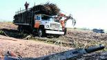 Campesinos de Temoac informan pérdidas de cultivos tras falta de lluvias