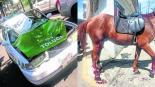 accidente caballos toluca estado de mexico atropellan caballos cohetes