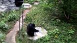 Video changuito lavando ropa