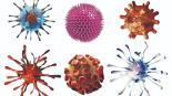 Conoce la diferencia entre virus y bacteria