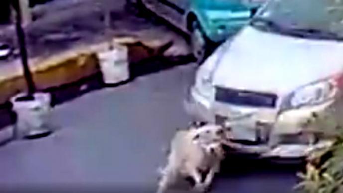 Conductor que atropella intencionalmente a un perro en Neza