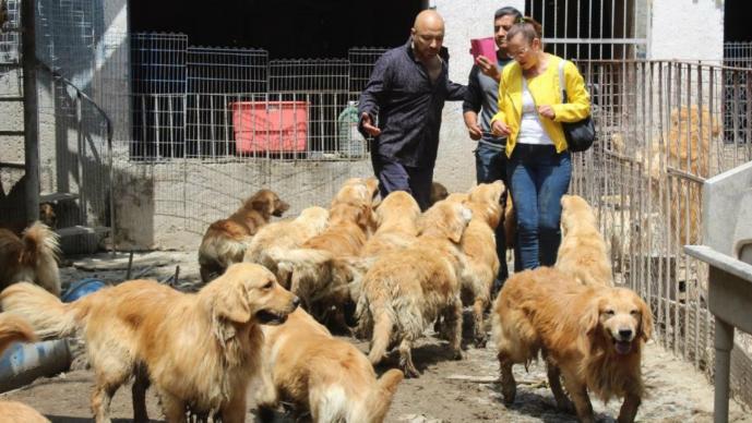 Rescatan a 30 perros de un criadero en Iztapalapa