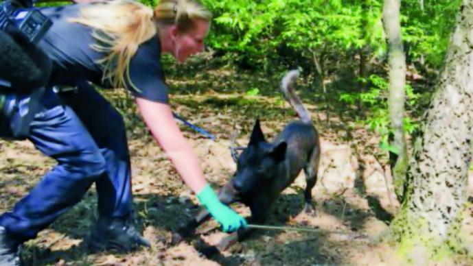 Entrenan perros para dar con violadores