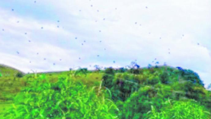 Video aterrador: mirá a una espectacular 'lluvia de arañas'