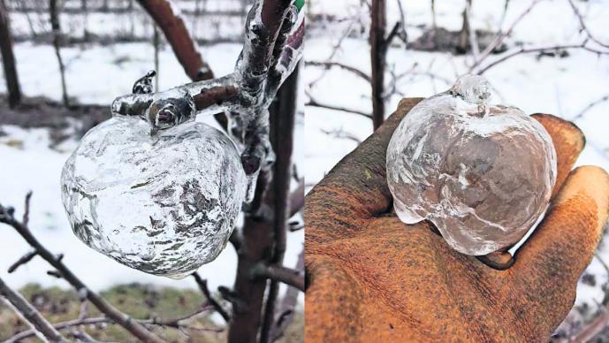 bajas temperaturas frío extremo manzanas congeladas hielo cristal estados unidos