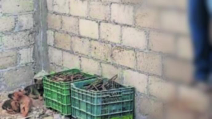 Extorsionadores cuelgan de cadena aguacatero Ixtapan del Oro