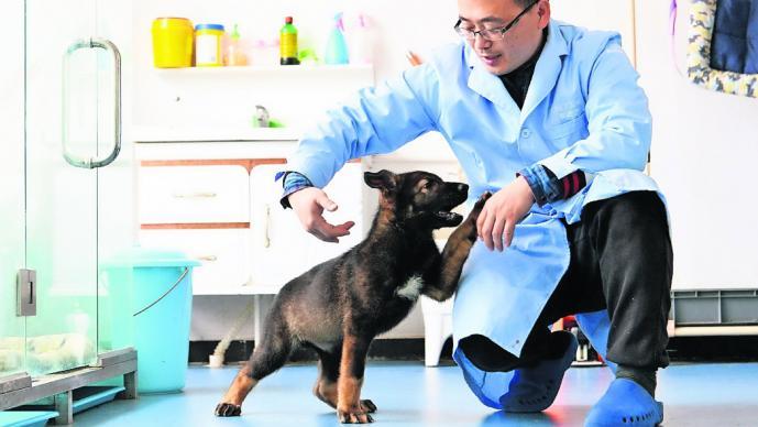 Clonan a perro policía en China para ahorrar en entrenamientos