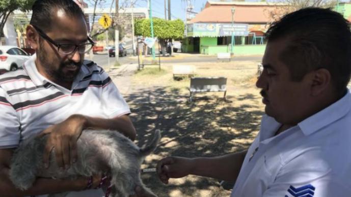 campaña de vacunación contra la rabia
