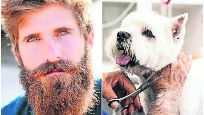 barbas largas más bacterias perro