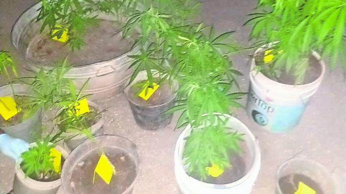 detenidos portar armas de fuego droga plantas de marihuana morelos tlaltizapán