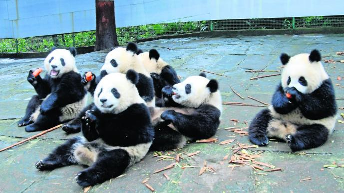 Reconocimiento facial Pandas China