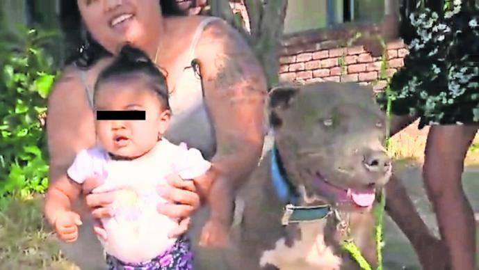 Perrita Pitbull salvó a bebé de un incendio tras halarla del pañal