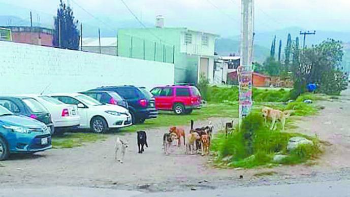 perros ataques jaurías personas denuncian toluca