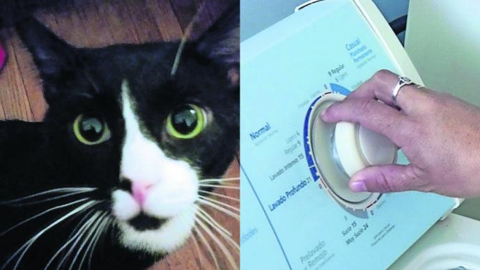 gato sobrevive lavadora ciclo lavado recuperación veterinario estados unidos nueva jersey