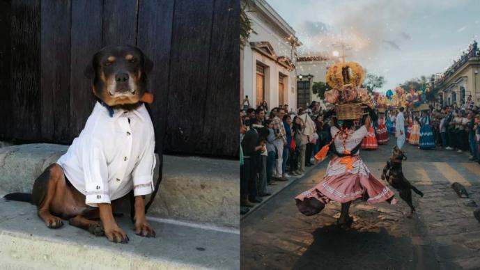 Regalan guayabera al perrito Mazapán y divide opiniones en redes sociales