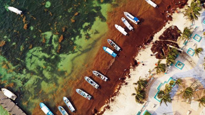 Sargazo Quintana Roo Fotografías