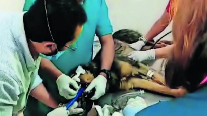 envenenamiento perros edomex toluca estado de mexico