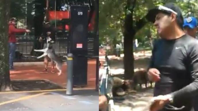 perro ahorcado parque mexico