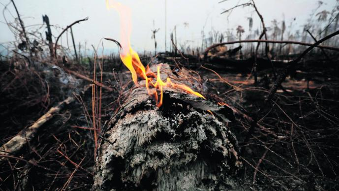 pulmón del mundo amazonia incendios desplegan aviones militares sofocar llamas ayuda brasil