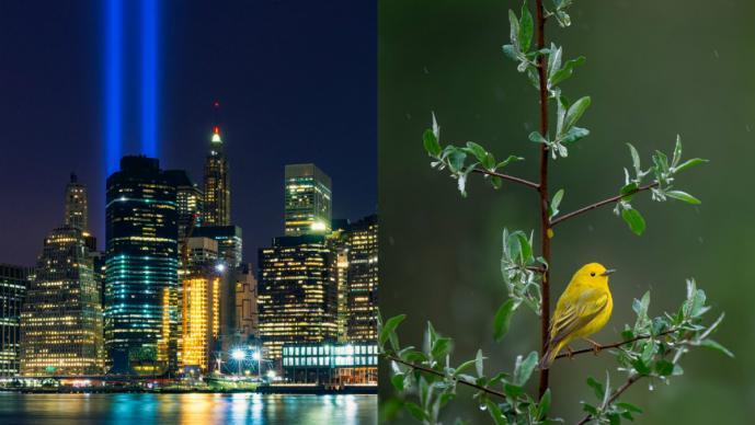 Torres Gemelas tributo luces aves migratorias