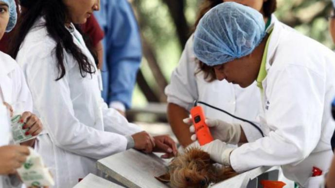 Esterilización de mascotas Querétaro