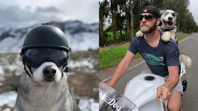 perro sox motociclista viaja perrito biker michael recorren estados unidos