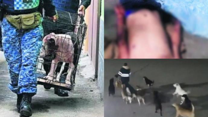 Ataques perros México