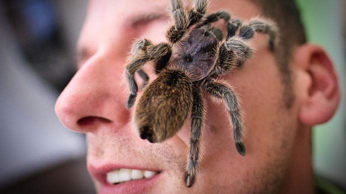 exposición de arañas insectos pasea rostro visitante turista alemania