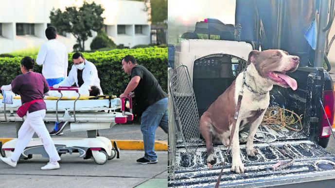 Pitbull ataca niño en Tlalpan