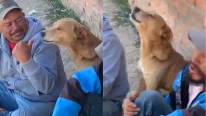 perro canta los temerarios video aulla video