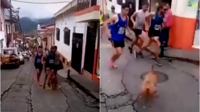 VIDEO: Corredor patea a perrito y causa repudio en redes sociales; pierde patrocinio
