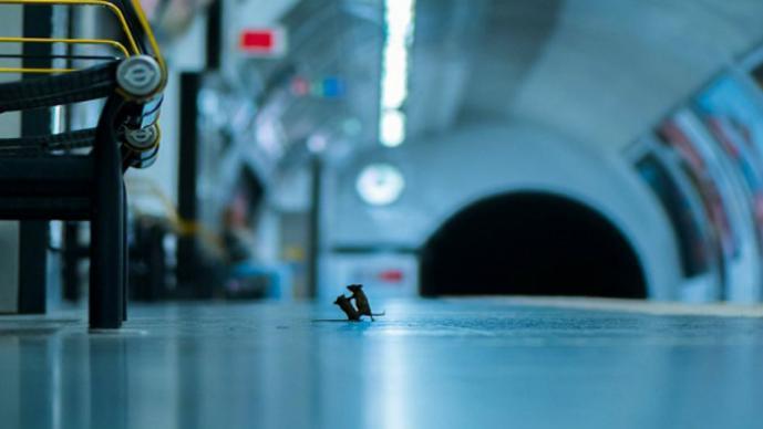 Imagen viral de ratones peleando por comida en el metro de Londres gana concurso de foto