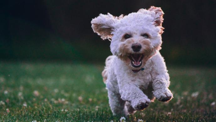 ¿Cómo protejo a mi perro del Covid-19 cuando lo saco a pasear?