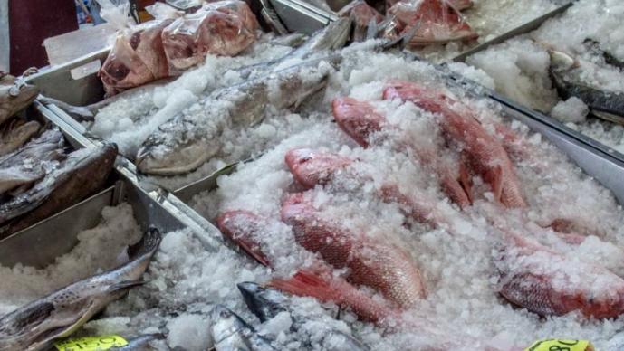 Por pandemia, baja la venta de pescados y mariscos para la cuaresma en Morelos