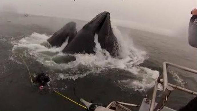 Ballena saliendo del mar