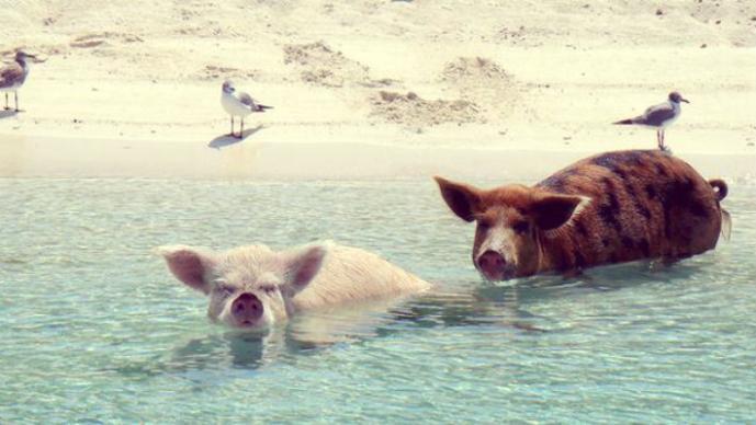 Los fenómenos animales más increíbles del mundo (Foto: Tiwitter @GrupoMascoteros)