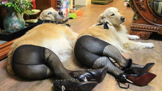 Perros con medias y tacones en China indigna al mundo