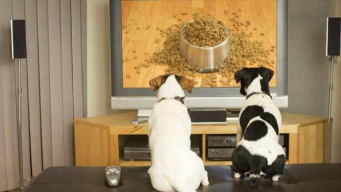 Canal para perros