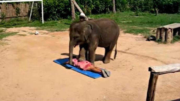 Mujer recibe masaje de un elefante | VIDEO