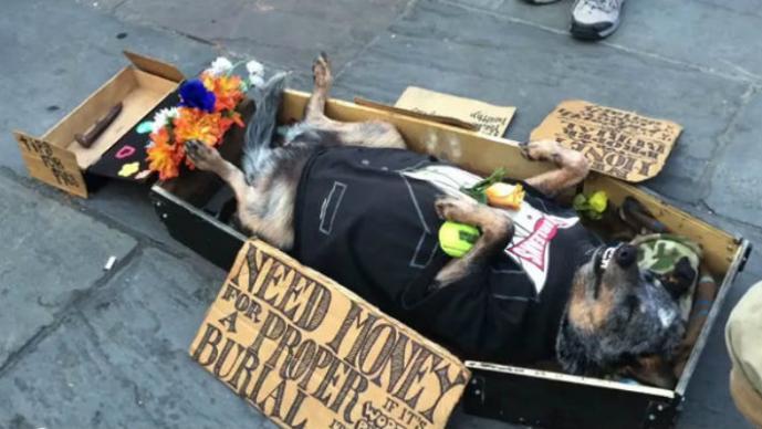 Galen, el perro que finge su funeral