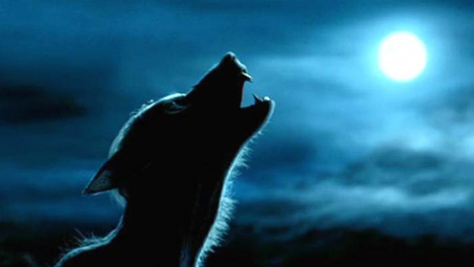 Hombre lobo se aparece en México