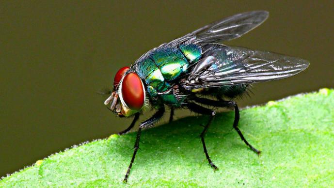 Resultado de imagen para mosca