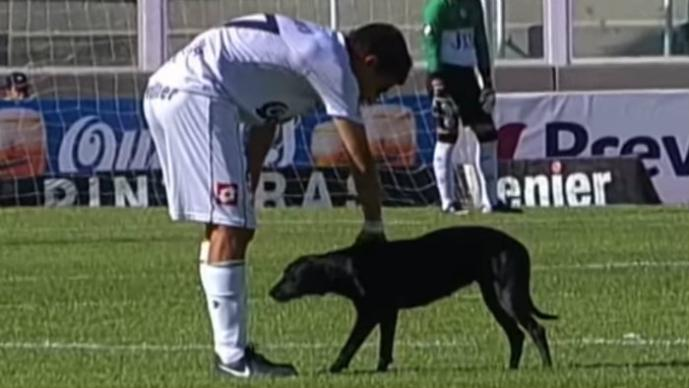 Perro, Cancha