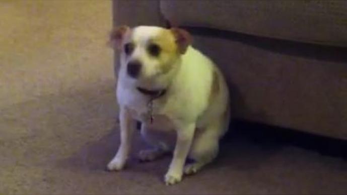 Perro muestra cómo mover el trasero