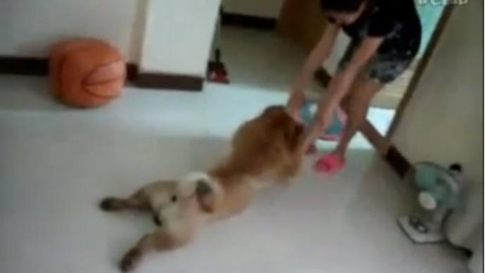 perro no se quiere bañar