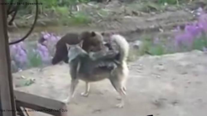 Perro, oso