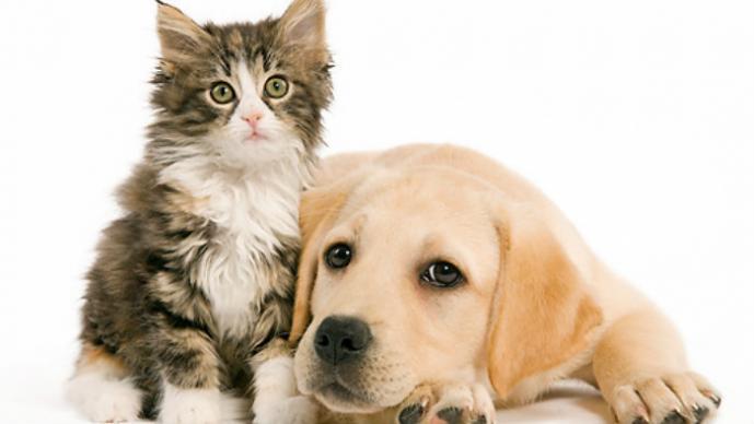 Perro dona sangre a gato